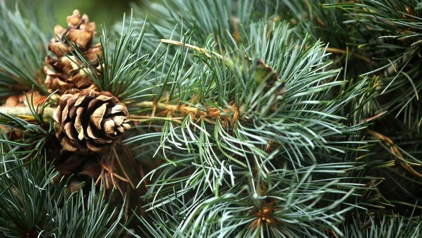 Odvoz vianočných stromčekov v meste Považská Bystrica